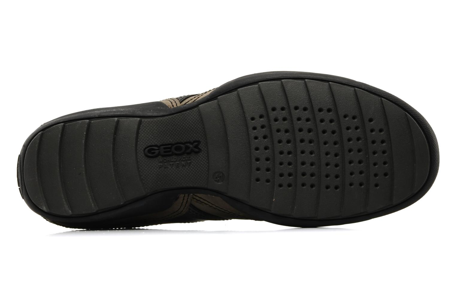 Trainers Geox U pietro r Brown view from above