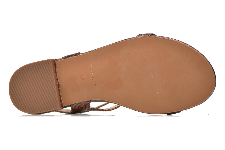 Sandales et nu-pieds Esprit Aely Bis Sandal Marron vue haut