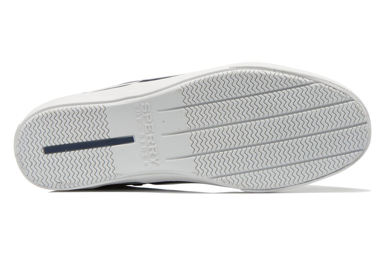 Striper LL CV010 Bleu