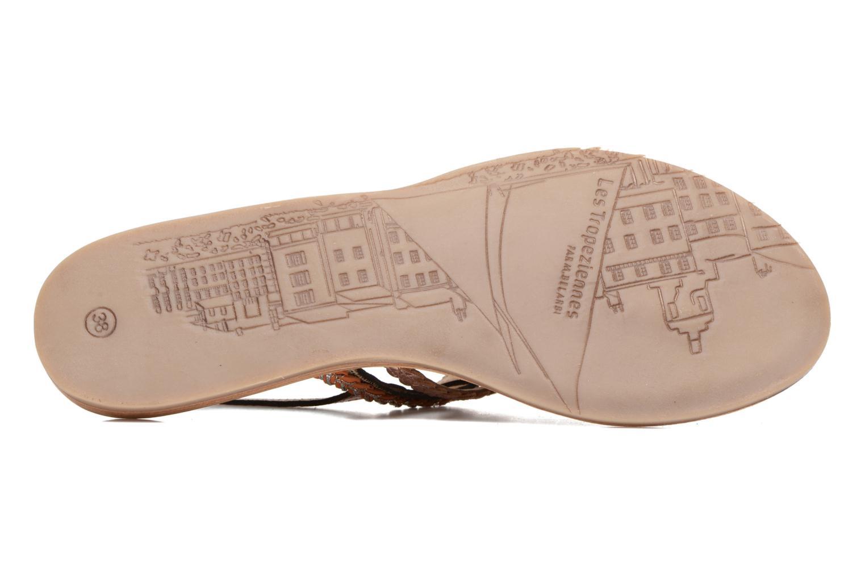 Sandalias Les Tropéziennes par M Belarbi Baraka Oro y bronce vista de arriba